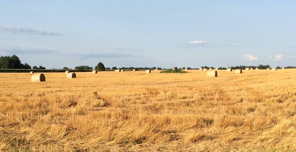 Photo sourced from Purdue Extension-Delaware County Facebook Page (www.facebook.com/ExtensionOffice)